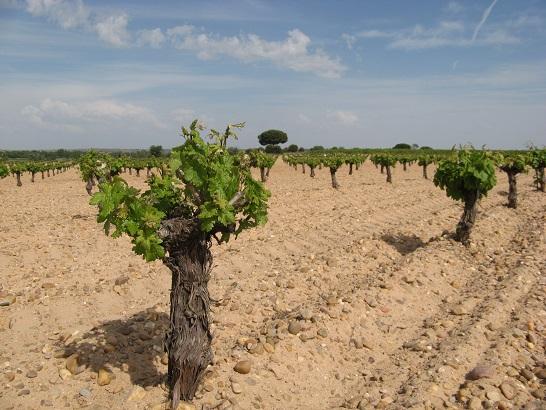 Viñas, Cantos y Arenas en Toro (Zamora)