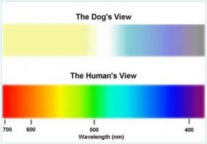 Como ve un perro