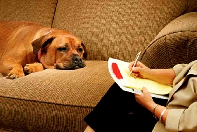 la psicologia del perro