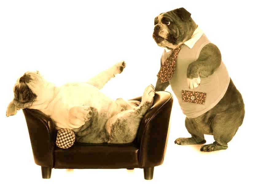 Resultado de imagen para 2 caninos