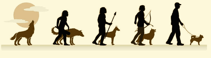 Evolución y formación de las razas