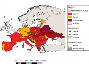Map-showing-the-current-distribution-of-Dirofilaria-repens-in-dogs-and-humans-in-Europe_W640