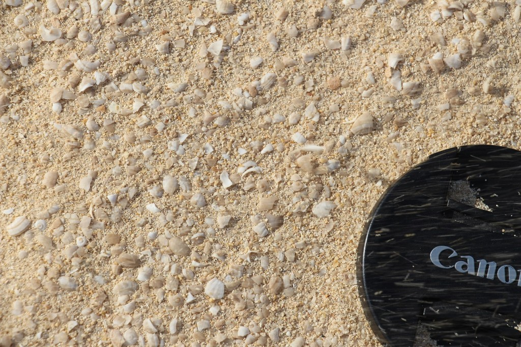 Arenas de cuarzo y fragmentos de conchas. Dunas de Corralejo (Fuerteventura).
