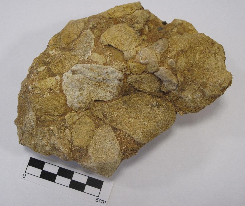 Rudita: Conglomerado con cantos carbonatados. Formación Pudinga de Posada. Paleógeno (Cenozoico). Vallobal (Concejo de Piloña. Asturias).